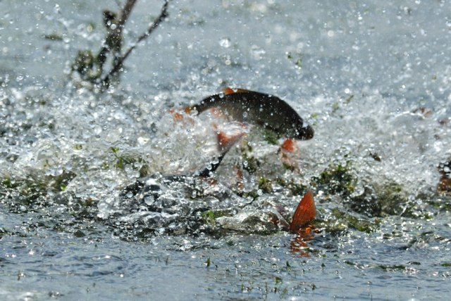 нарушение правил рыболовства ловлю рыбы в пруду