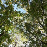 Висаджування лісів у Європі може призвести до зростання кількості опадів. І це не обов'язково добре, кажуть дослідники
